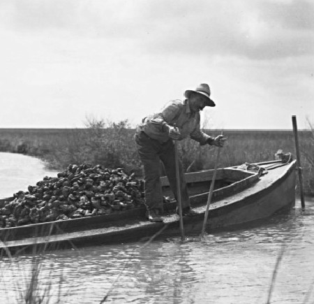 Oyster farming in New Orleans